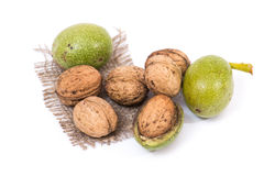 Green walnuts Stock Image