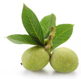 Green walnuts with leaves. Royalty Free Stock Photo