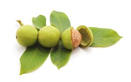 Green walnuts with leaves. Royalty Free Stock Photography