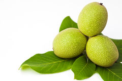 Green walnuts with leaves isolated on a white Stock Photography
