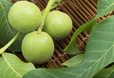 Green walnuts and leaves Stock Image