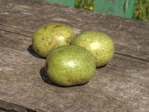 Green walnuts on table Stock Photography