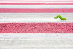 Green warm walking. Green worm walking on street. Facing a challenge concept Stock Images