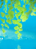Green and water. Natural green leaves with blue water Royalty Free Stock Photography