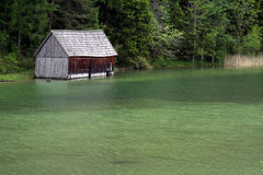Green water. Walking around a lake with green water royalty free stock photo