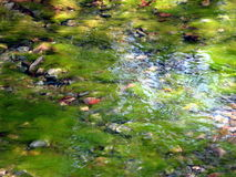 Green water. The vegetation in a creek royalty free stock photography