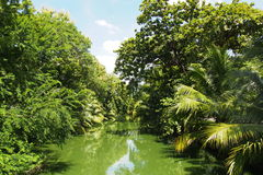 Green water canal. In plantation Stock Photo