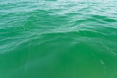 Green Water Close Up. Of The Black Sea Royalty Free Stock Photography