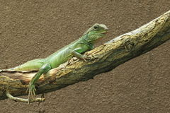 Green water dragon Royalty Free Stock Photography