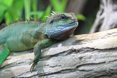 Green water dragon Royalty Free Stock Images