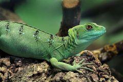 Green water dragon Royalty Free Stock Photos