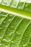 Green Water Drops Leaf Background Stock Images