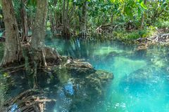 Free Green Water In Green Perfect Swamp Forest At Tha Pom Klong Song Nam Stock Photo - 141195590