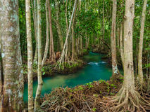 Green Water Lakes River Waterfall With Root Tree At Tha Pom Klong Song Nam, Krabi, Thailand Royalty Free Stock Images
