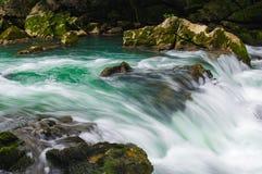 Green water Stock Image
