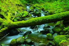 Green water and moss. Royalty Free Stock Image