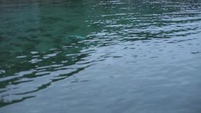 Green water near bank. High angle closeup shot of calm green water of a river bank stock video footage