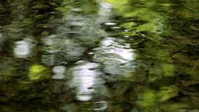 Green water reflections. On the surface of a creek with changing focus point stock video footage