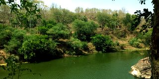 Green water river in the forest royalty free stock images