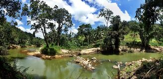 River in the rainforest panorama