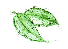 Green water splash leaves Royalty Free Stock Image
