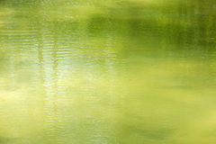 Green water surface. In clear pond stock images