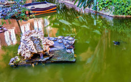 Green water turtles in an artificial pond at the Atocha station - Madrid, Spain Royalty Free Stock Photo