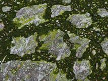 Green, water, world, algae, sea stock photography