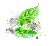 Green watercolor leaves with gray paint splashes on paper. Royalty Free Stock Image
