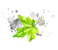 Green watercolor leaves with gray paint splashes on paper. Royalty Free Stock Photos