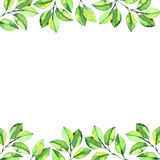 Green watercolor leaves round composition background Stock Photography
