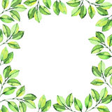 Green watercolor leaves round composition background Royalty Free Stock Photo