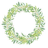 Green watercolor olive branch. Frame on white background vector illustration