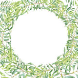 Green watercolor olive branch Royalty Free Stock Image