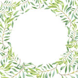 Green watercolor olive branch. Frame on white background Stock Photo