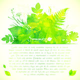 Green watercolor summer leaves greeting card. Green watercolor summer leaves vector greeting card template Royalty Free Stock Images