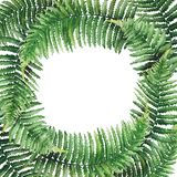 Watercolor fern wreath. Green watercolor wreth of fern branches. Hand painted natural design  on white background Royalty Free Stock Image