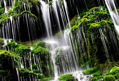 Green waterfall... Stock Photos