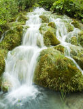 Green waterfall Stock Photography