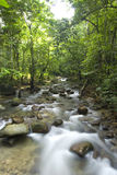 Green waterfall Stock Photos