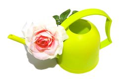 Green watering can flower rose. Watering can with white rose white background Royalty Free Stock Photos