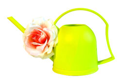 Green watering can flower rose Royalty Free Stock Photo
