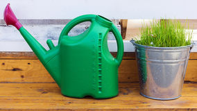 Green watering can and galvanized bucket of grass in the garden Stock Image