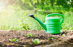 Green watering can in garden on ground Royalty Free Stock Photo