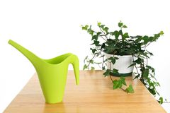 Green watering can and ivy in pot Stock Photos