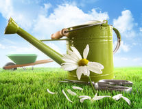 Green watering can with large daisy Royalty Free Stock Photo