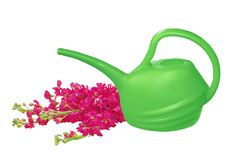Green watering can with red flowers isolated on white Stock Photos
