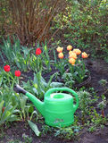 Green watering flower beds with tulips Royalty Free Stock Images