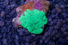 Green watermalon Japan muchroom coral Royalty Free Stock Images