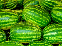 Green watermellons Stock Images